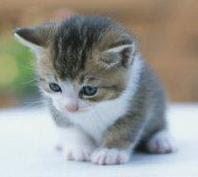 Dia Mundial dels animals